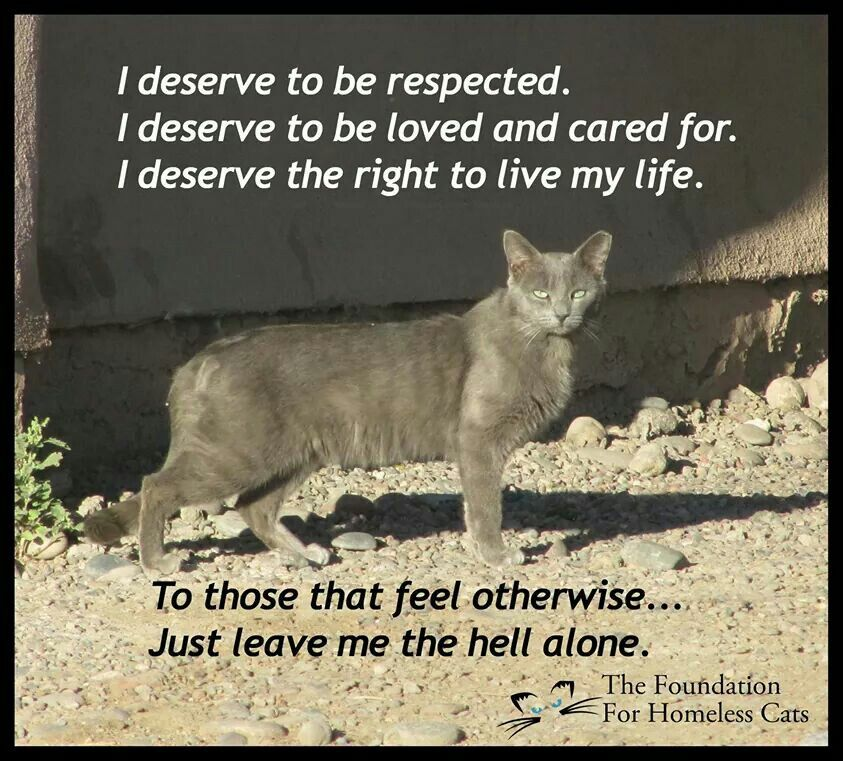 I Agree 100 Dog Adoption Quotes Feral Cats Cats