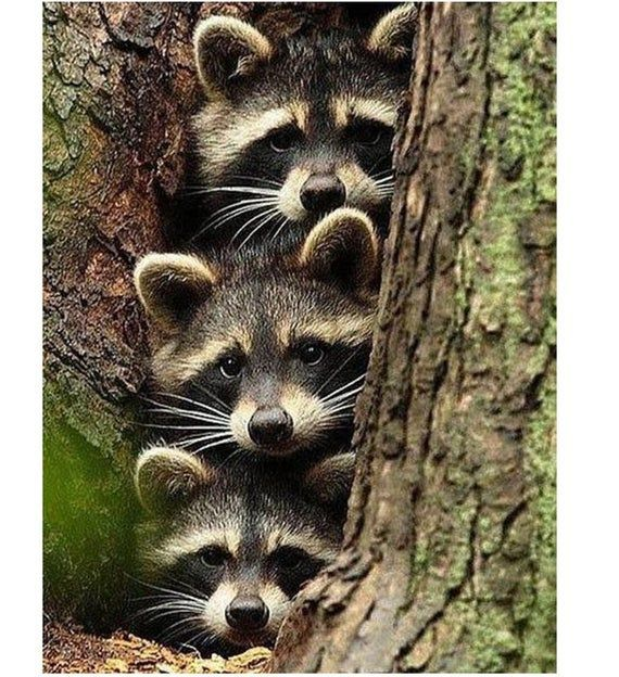 Raccoons diamond painting full square wall art mosaic stickers animals diamond dotz picture scenery magic crystal stone embroidery paint diy