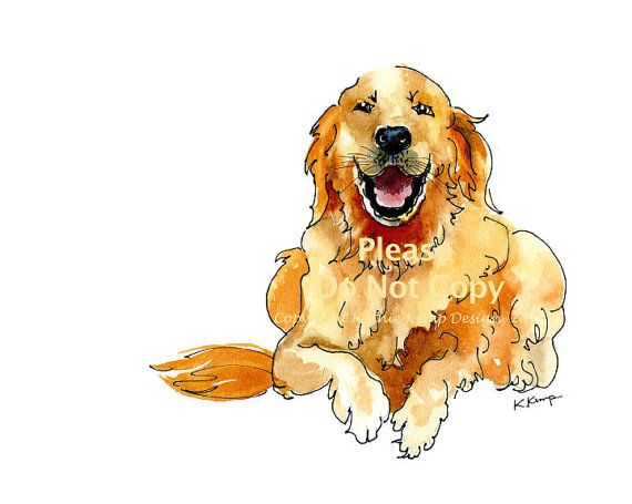 Golden Retriever Drawing Pen Ink Watercolor Gift Idea Fathers