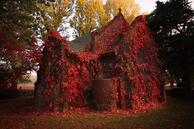 Autumn Ivy House Australia by Cain Pascoe
