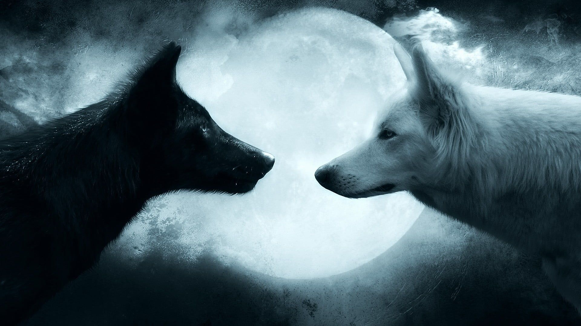 Two Black And White Wolves Wallpaper Wolf Couple 1080p Wallpaper Hdwallpaper Desktop Wolf Black And White Wolf Wallpaper White Wolf