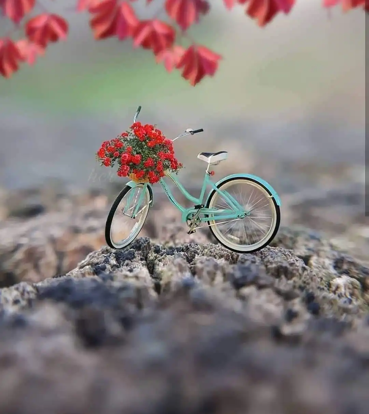 Wtsp Dp Picture Hd Download Miniature Photography Cute Photography Dp Photos