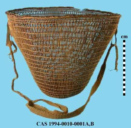 Conical burden basket with flat base and flaring walls; Woven primarily in open, 2-strand twining with several rows of 3-strand twining on base; Warp rods are crossed several rows below rim and bent over and braided at the rim; 2 canvas loops are attached to upper sides of basket, through which a hand woven tumpline (CAS 1991-0010-0001B) of string and native cordage could be attached. Height = 35.5, Max Diam = 45.5