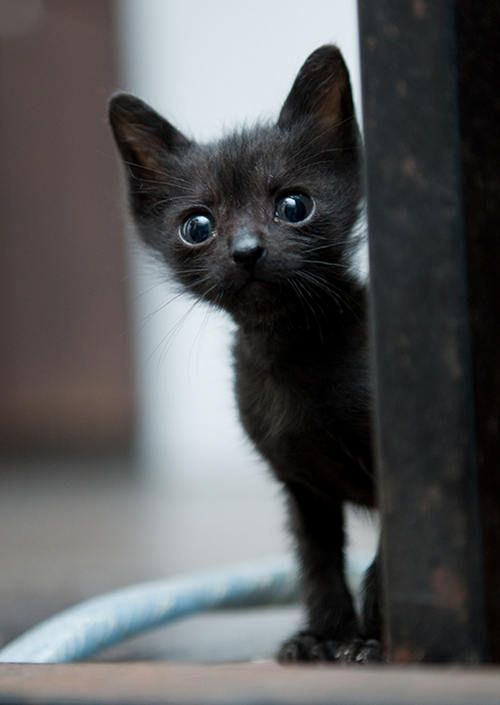 Tiny Rescue Black Kitty Then Now Pets Kittens Cutest Cat