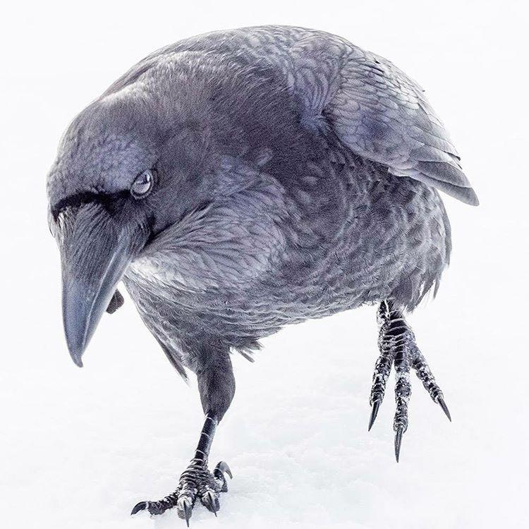 "June Hunter (@junehunterimages) on Instagram: ""Raven, incoming ..."
