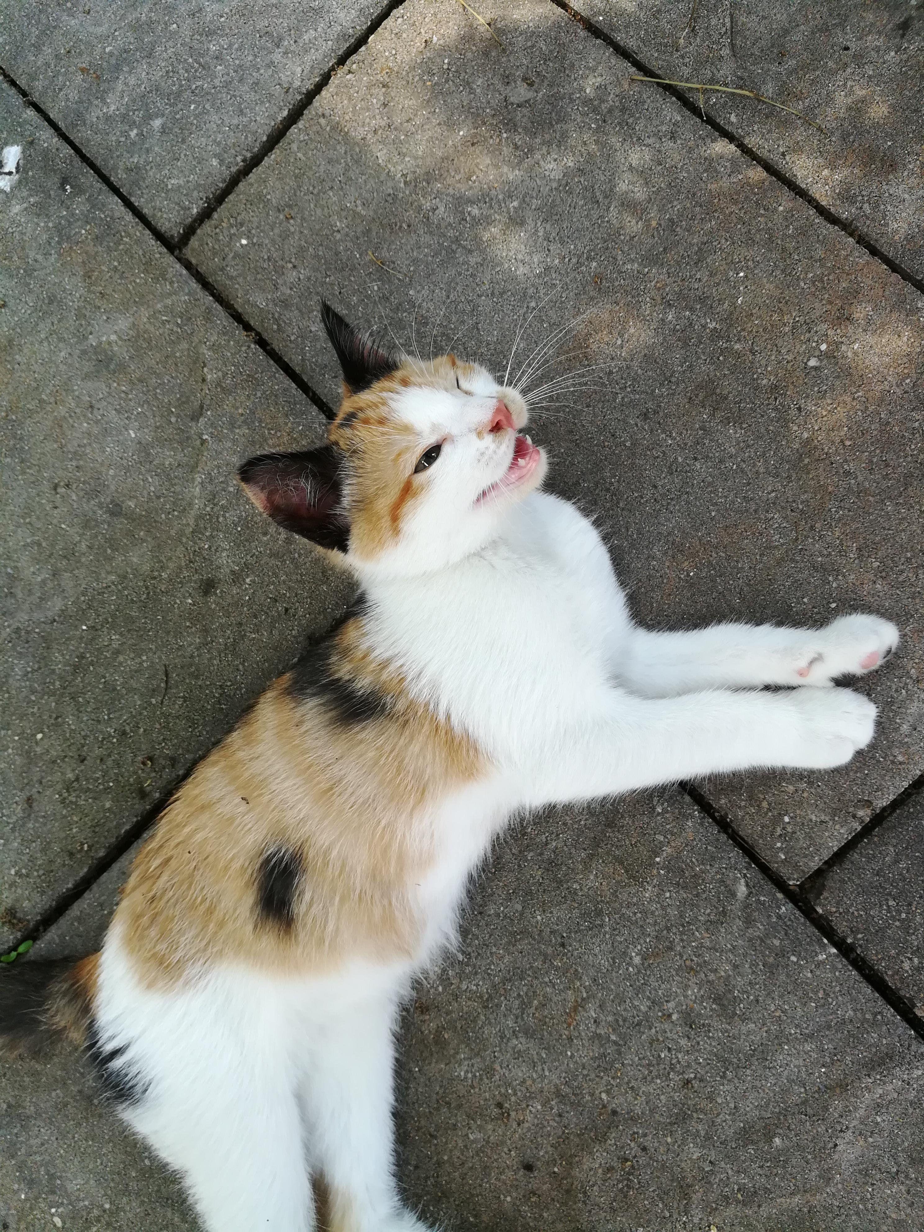 3 Month Old Teefies Mascotas