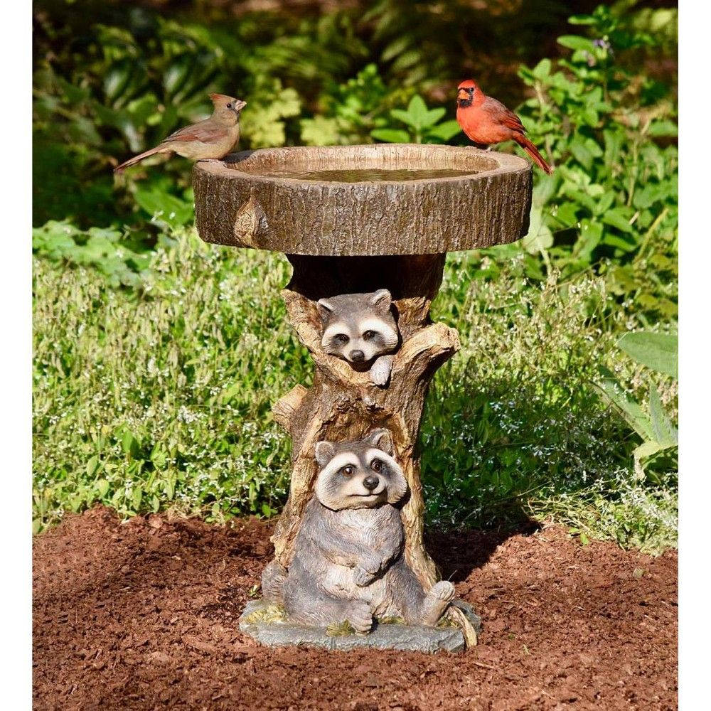 How To Attract Raccoons In Your Backyard - BACKYARD HOME