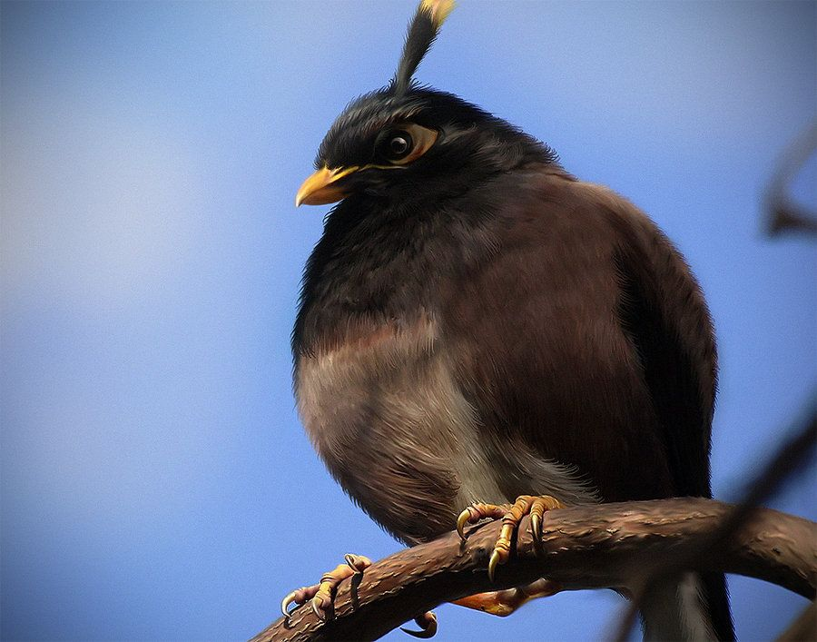Real Life Bomb Bird