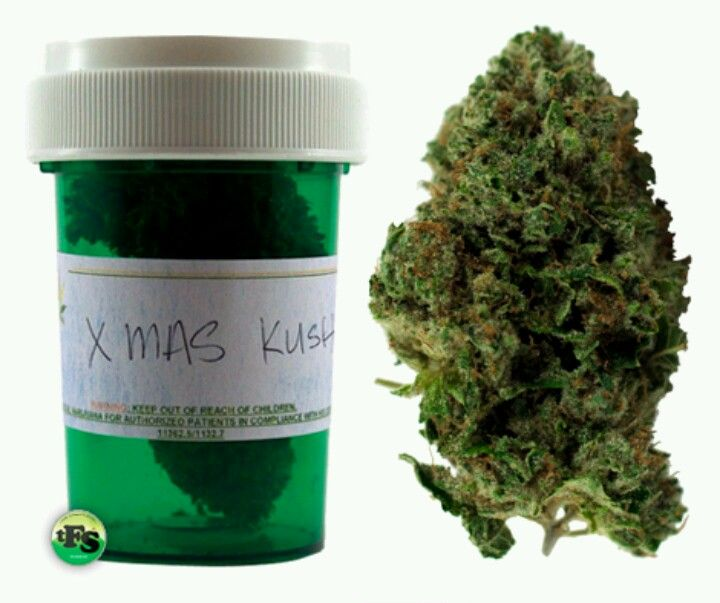 Image result for christmas og strain