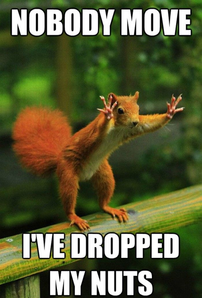 Nobody Move I Ve Dropped My Nuts Funny Photo Captions Squirrel Funny Real Estate Memes