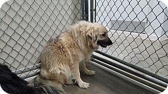 Pin On Worth Repining Adoptable Pets