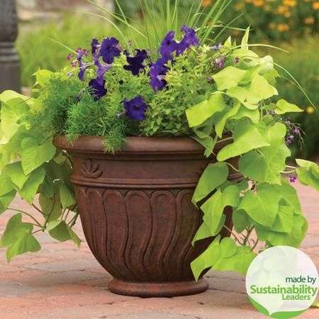 Better Homes And Gardens Hanging Baskets