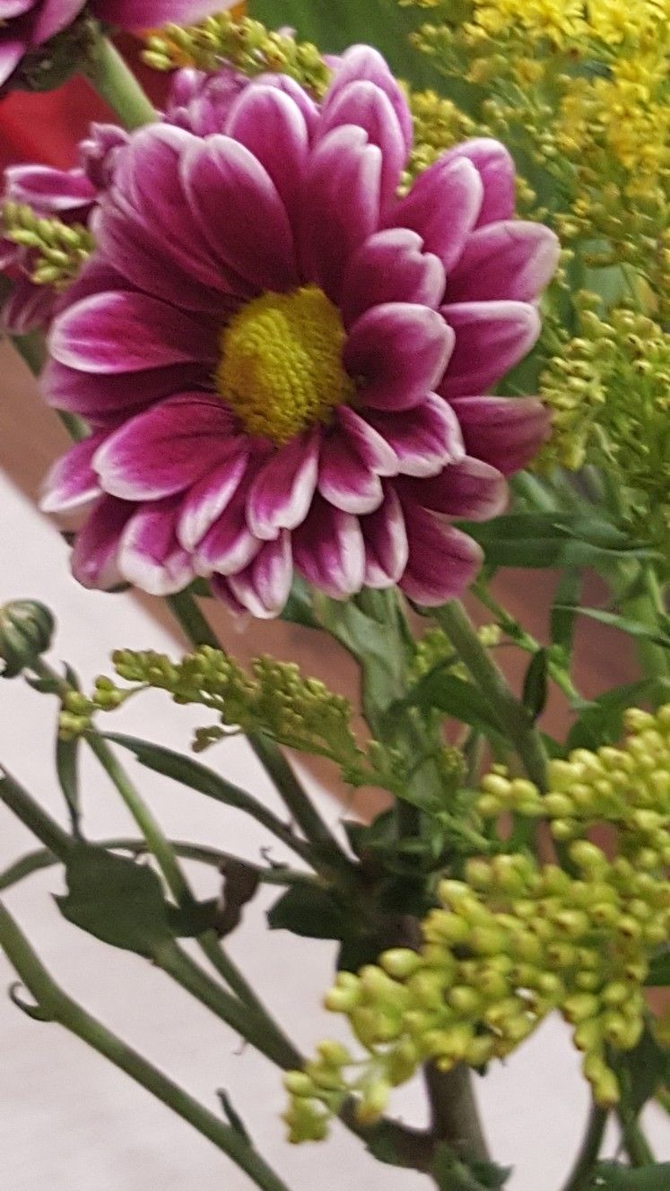Flor do Trader Joe's Plants, Trader joes, Garden
