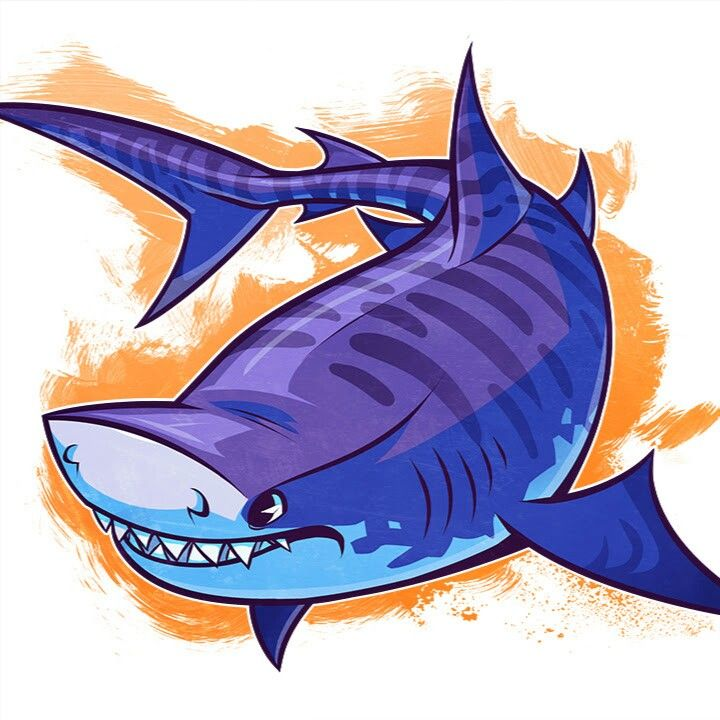 Cute Tiger Shark Sharks Pinterest Shark, Drawing ideas and - copy coloring page of a tiger shark