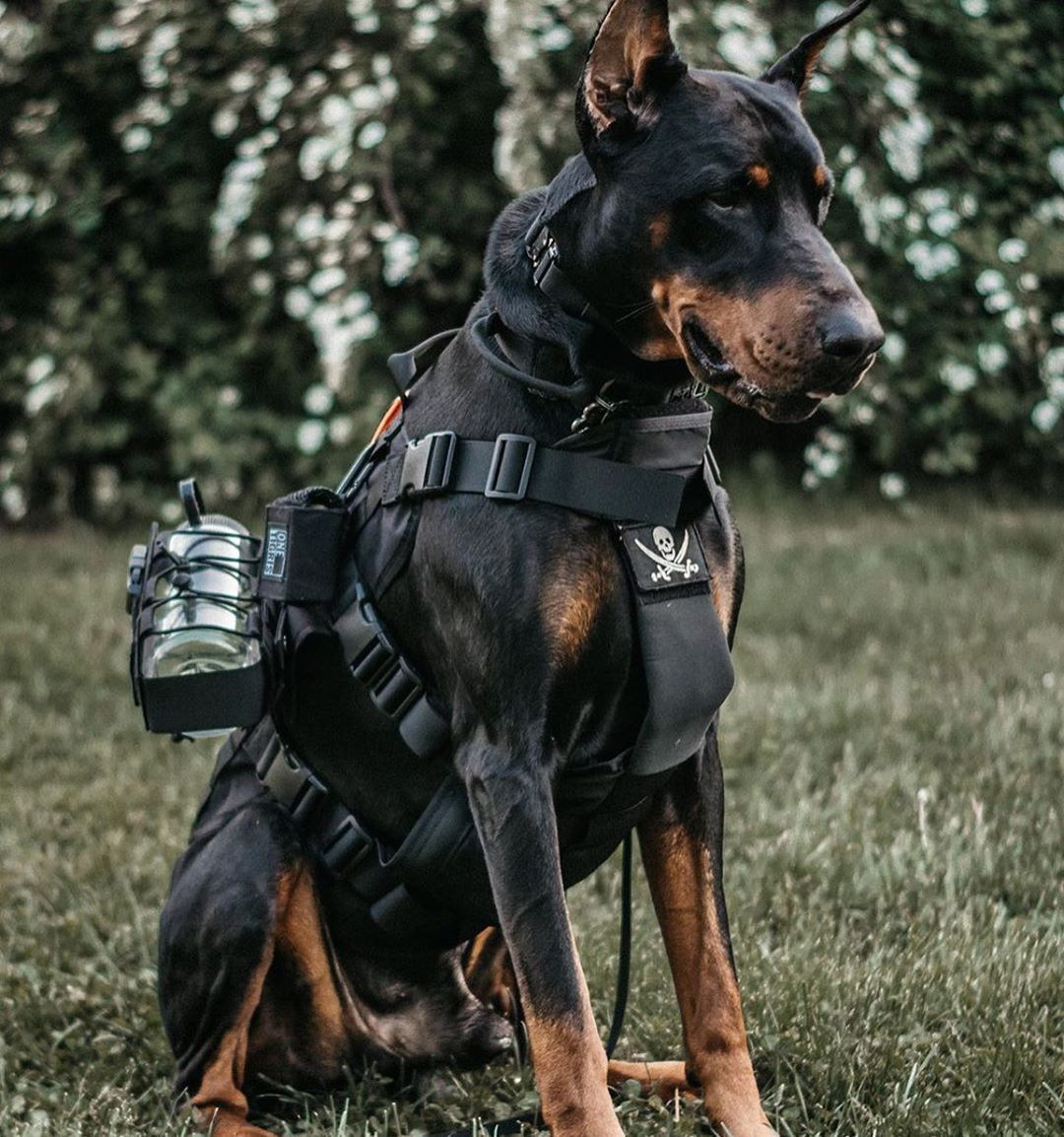 Onetigris Tactical Dog Vest With Molle And Grab Handles Onetigris