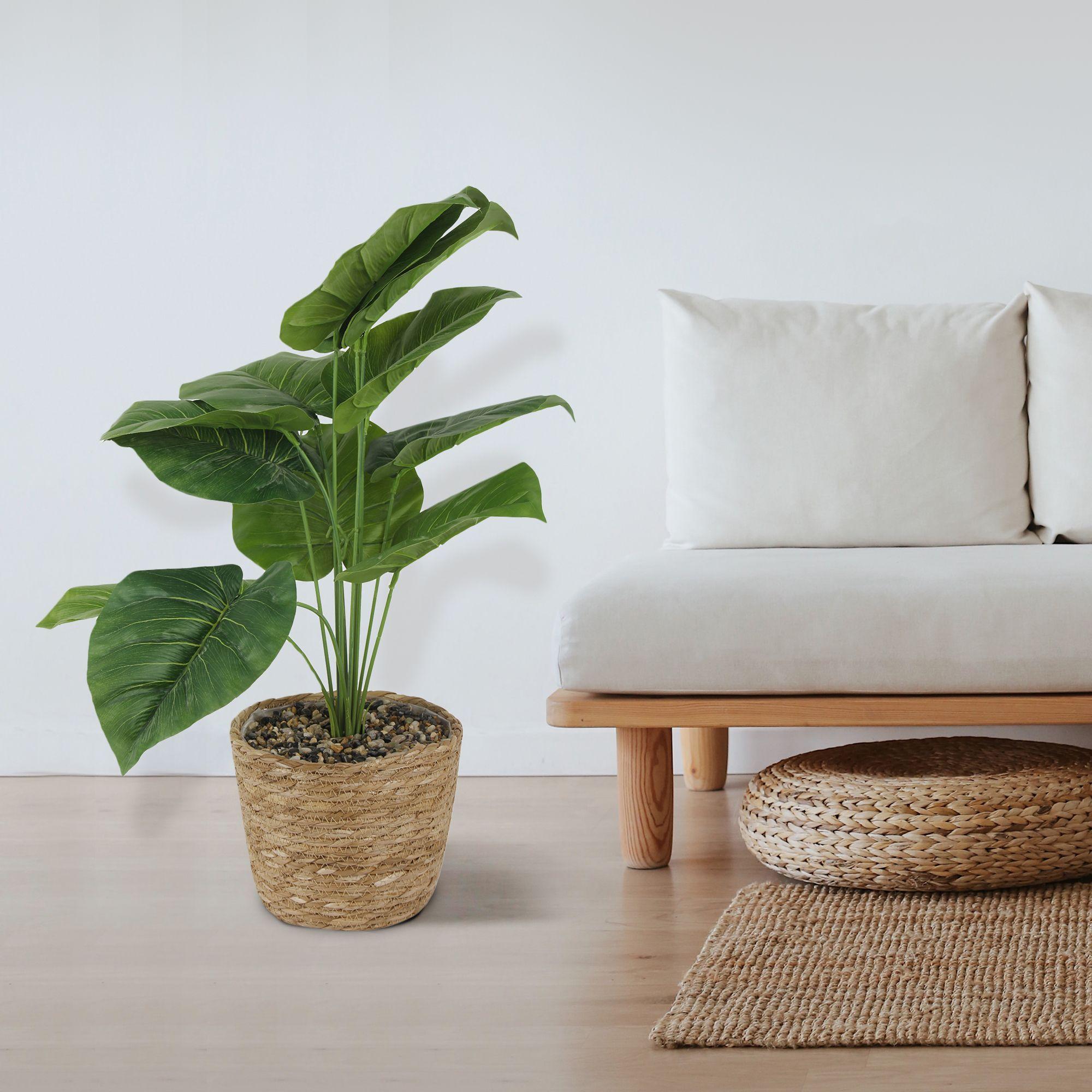 #fakeplantsdecor #colorfulhomedecor #fakeplants #plantswithbasket #succulentindoor #giftideas #aestheticgreen #aestheticwalldecor #apartmentwalldecor #bigwalldecorlivingroom #roomdecor #roomdecoration #roomdecorideas