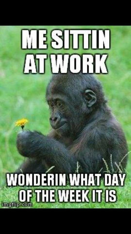 Funny At Work Pictures : funny, pictures, Sitting, Humor,, Funny, Animals,, Pictures