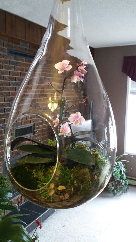 Hanging mini orchid terrarium good gardening for Terrario vertical