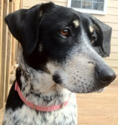 Ellie Coonhound Dog Adoptable In Atlanta Georgia Second
