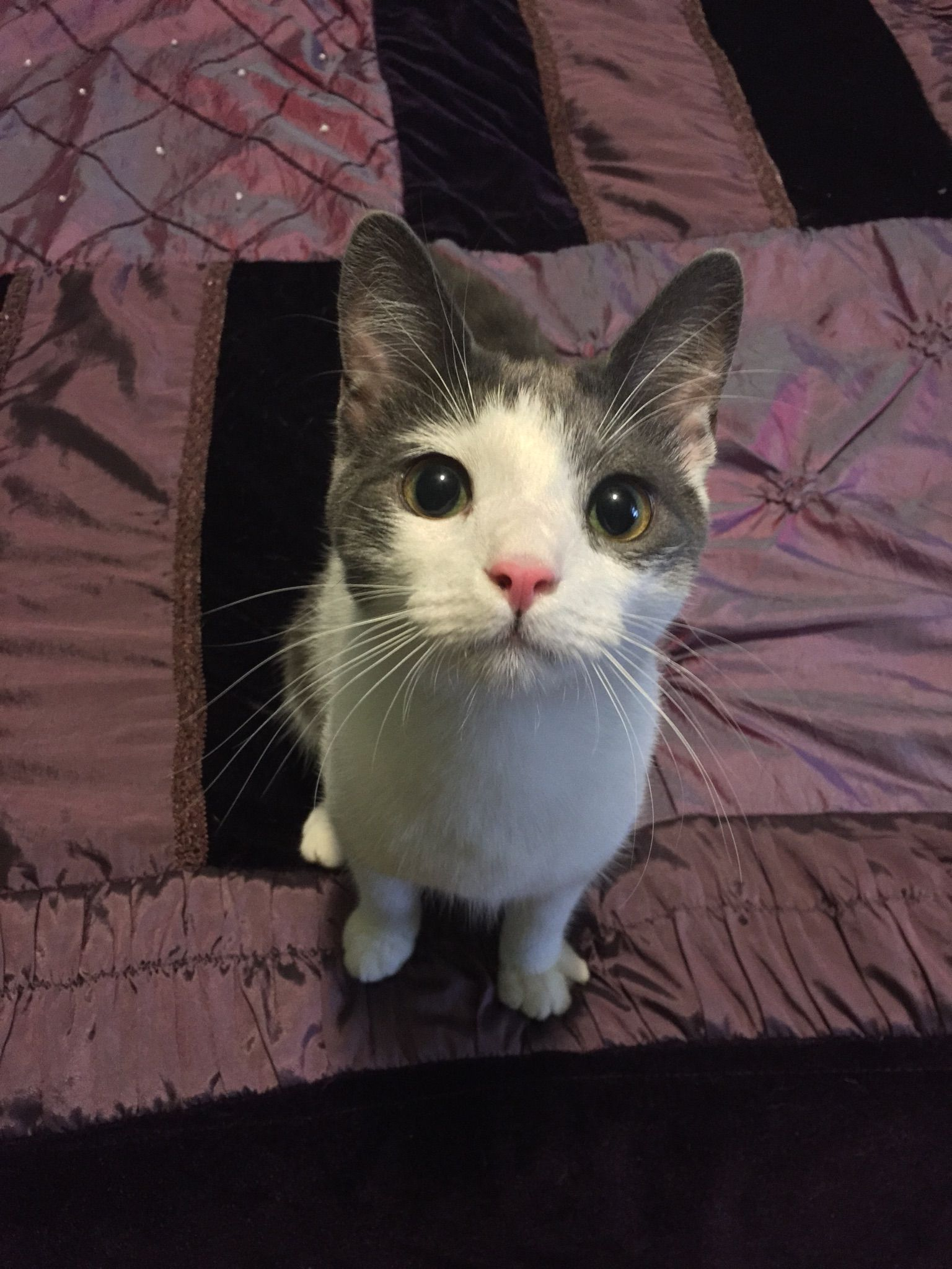 Reddit this is Muon! Cat day, Funny cats, Cats