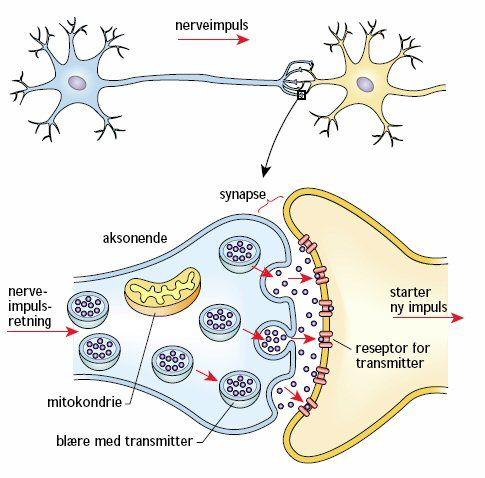 Axonmembran