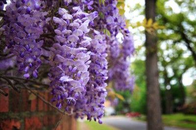 Pin On Garden Growing Tips
