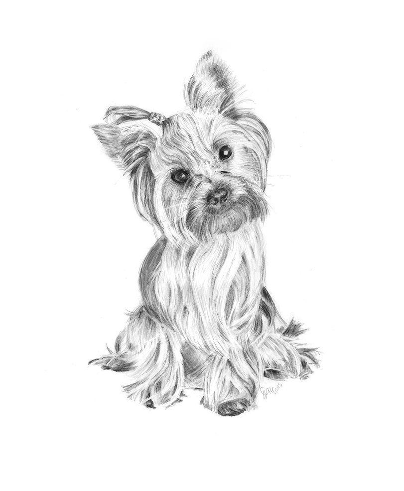 Yorkshire Terrier Pencil Drawing By Carlsyres Yorkie Painting Dog Coloring Page German Shepherd Art