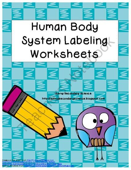 Human Body System Labeling Worksheets from Savvy Secondary Science on TeachersNotebook.com - (10 pages) - This is a collection of 6 different worksheets with answer keys. It includes: digestive system, excretory system, respiratory system, heart, neuron and endocrine system