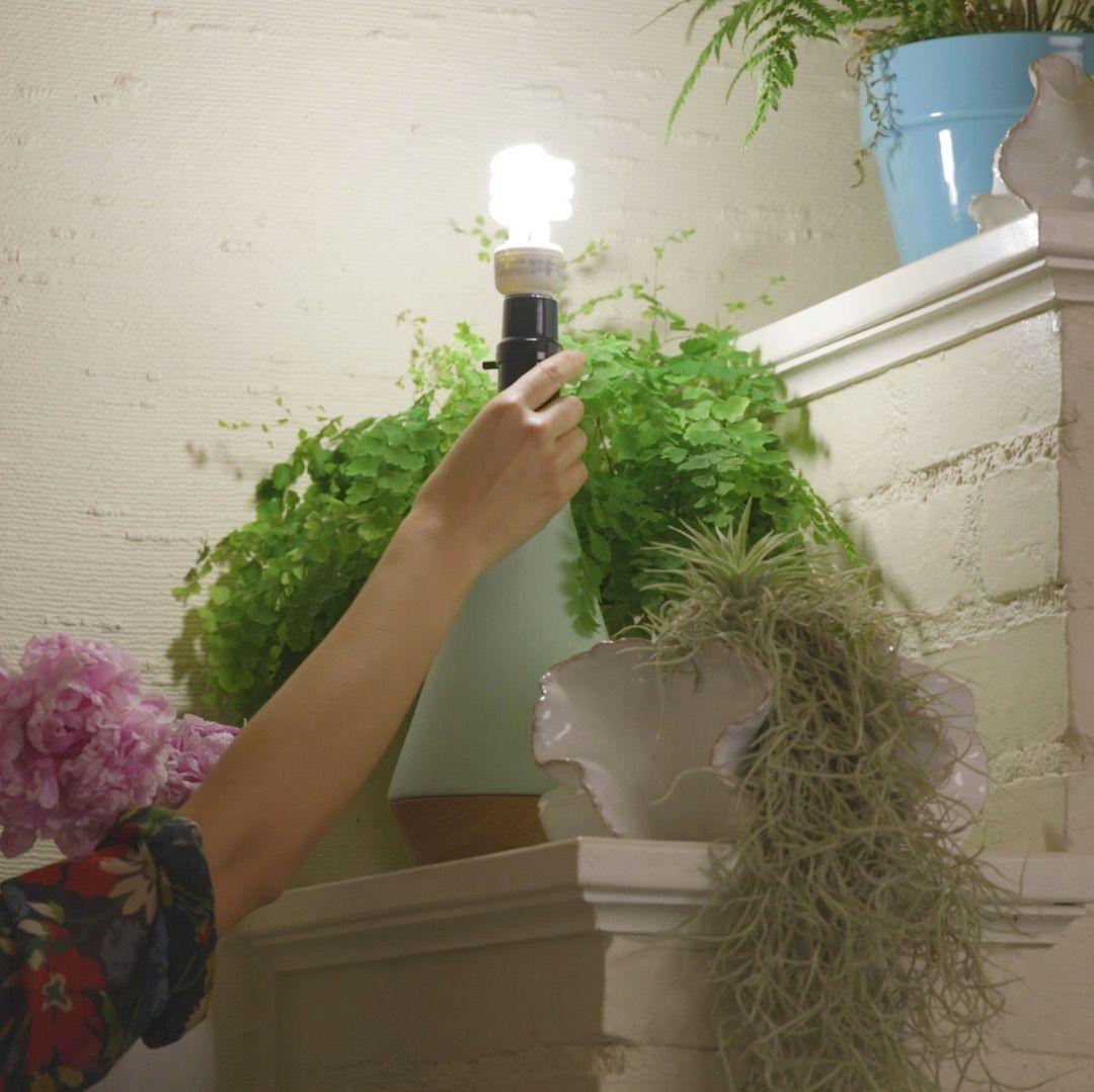 Tips For Indoor Gardening: 6 Tips For Indoor Gardening