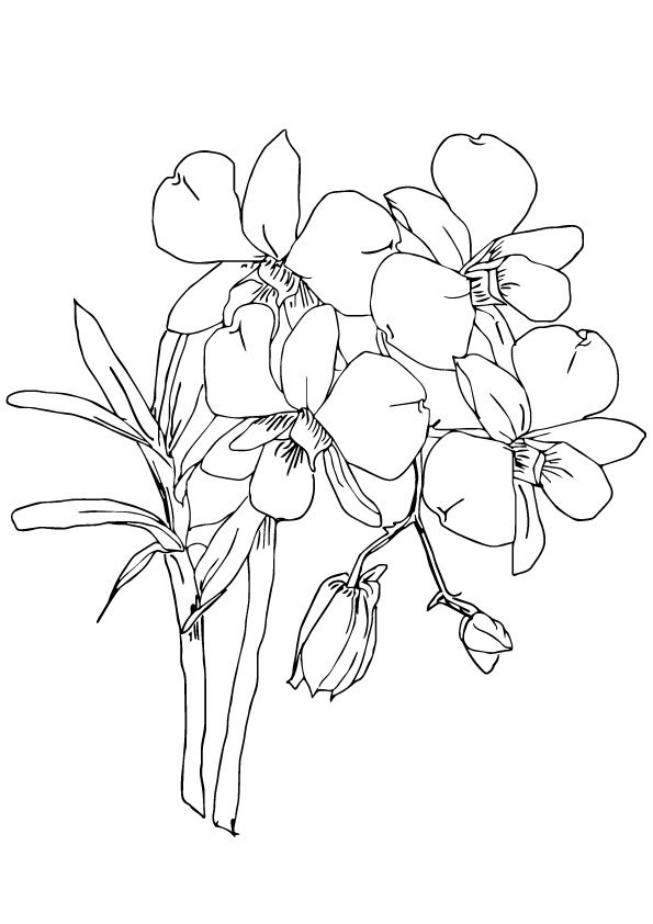 Print Coloring Image Momjunction Animal Coloring Pages Coloring Pages Flower Coloring Pages