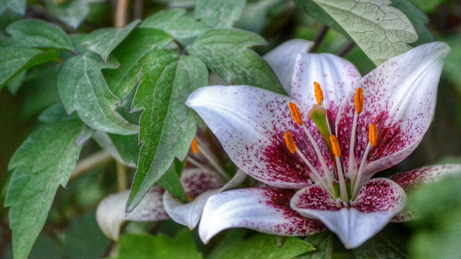 Lily flower wallpaper 2018 wallpapers hd flower pinterest lily flower wallpaper 2018 is high definition wallpaper you can make this wallpaper for your desktop background android or iphone plus izmirmasajfo