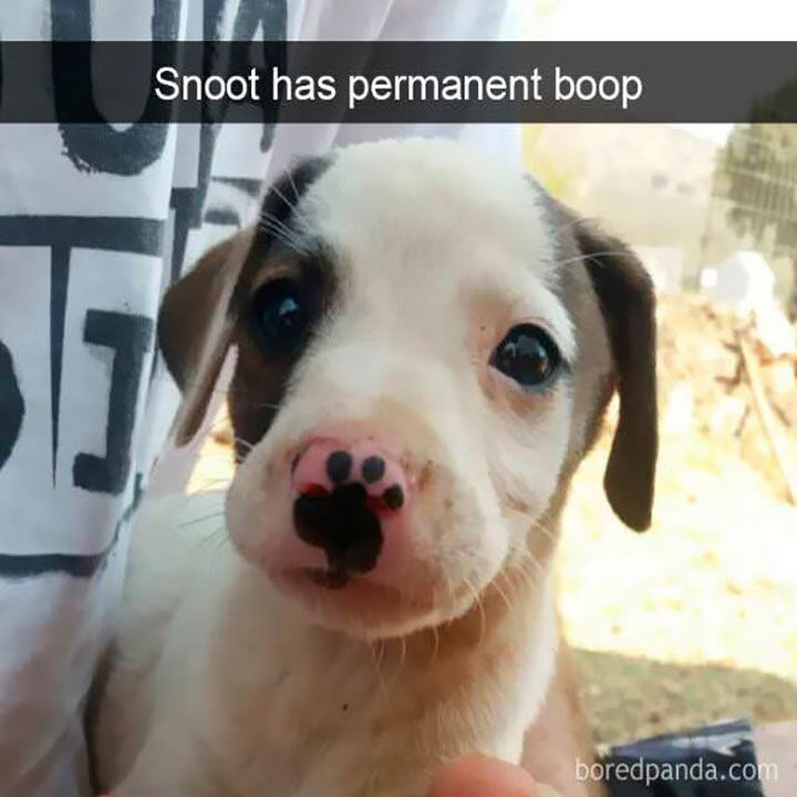25 Pics Funny Dog Memes To Cheer You Up On A Bad Day Lovely Animals World Dog Memes Funny Dog Memes Funny Dogs