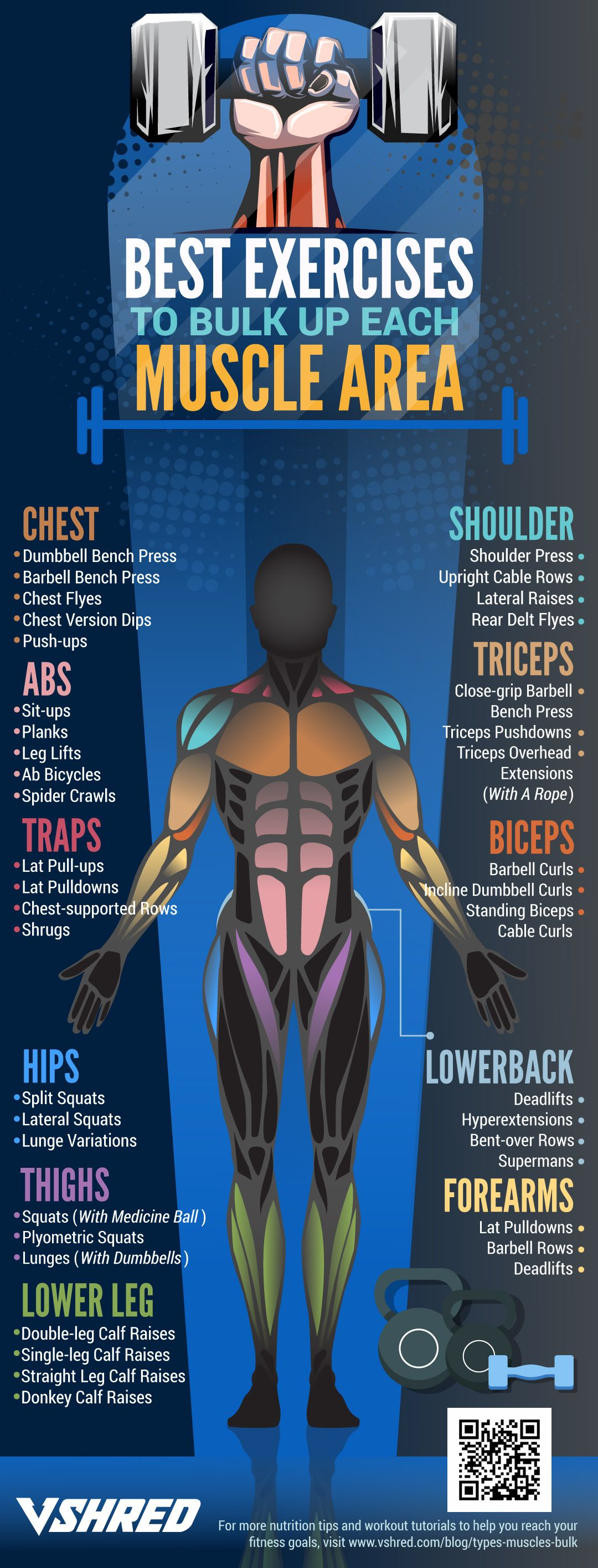 11 Types Of Muscles That You Can Bulk Up Which Types Of Muscles Would You Like To Bulk Health And Fitness Articles Fitness Articles Weight Training Workouts