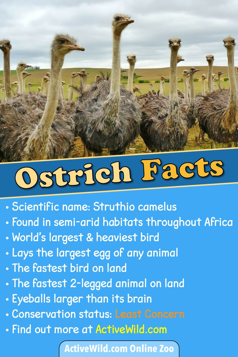 Interesting facts and abilities of the animal world