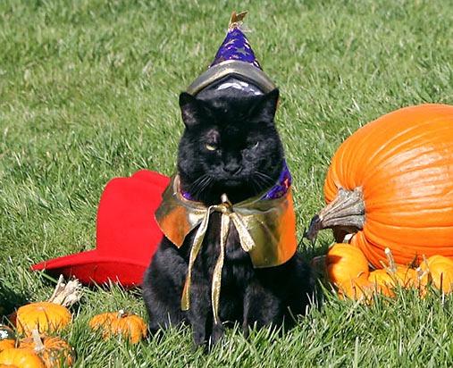 Pets In College Pet Halloween Costumes Fancy Cats Cats