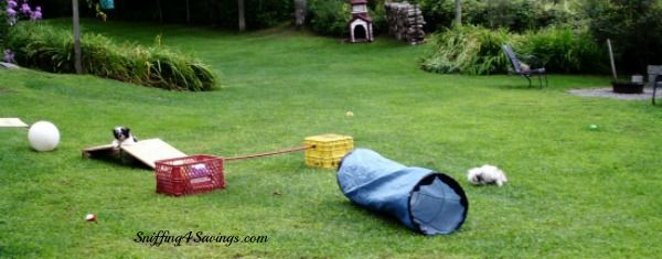 Backyard Puppy Agility Course DIY, cost $0. !   When I'm ...