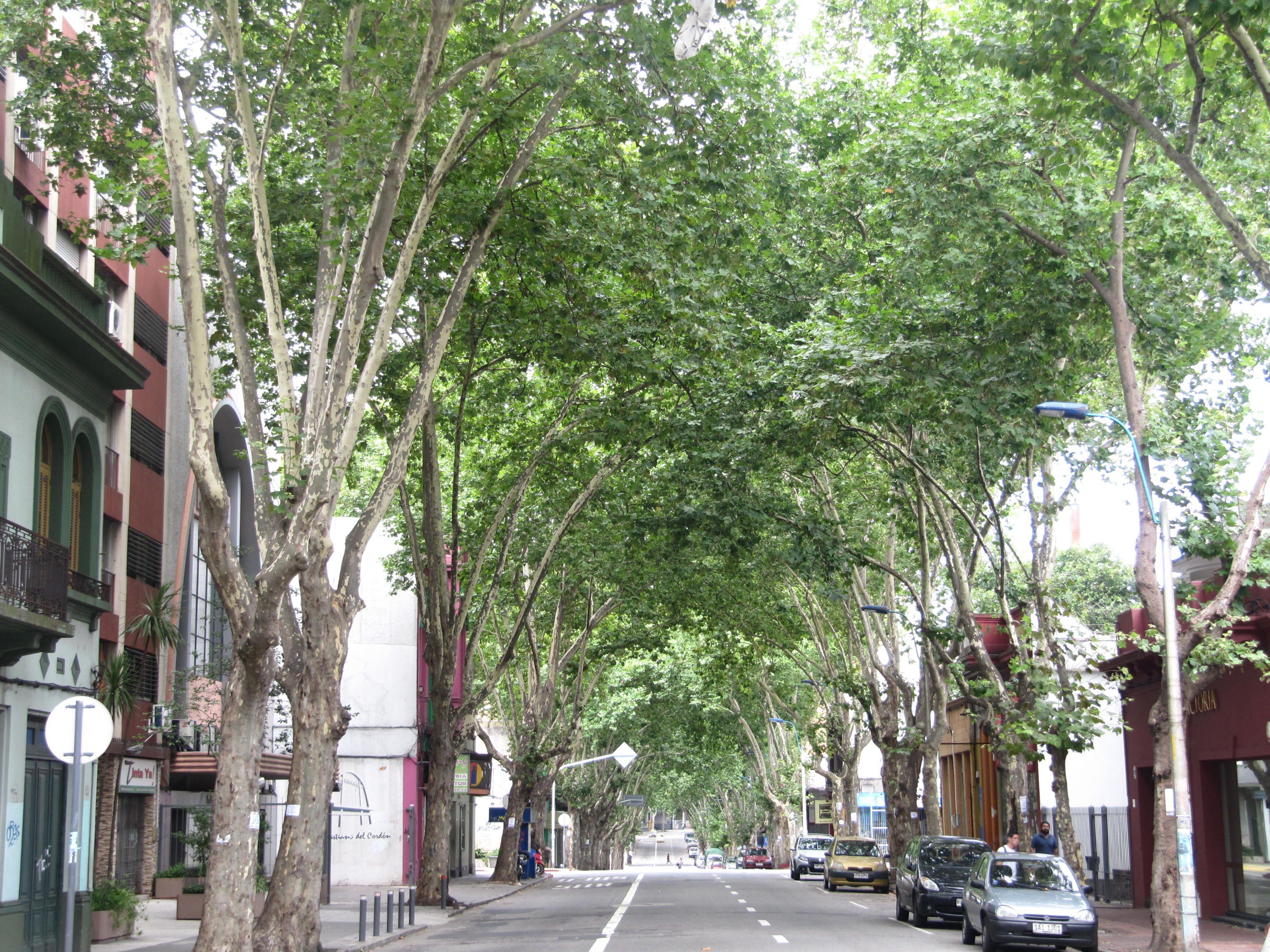 Rivera tranquilizada a la sombra de un techo de hojas.Avda Rivera,Montevideo,Uruguay.