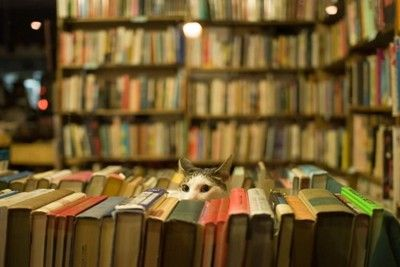 Who doesn't want to live in Book World when it looks like this?