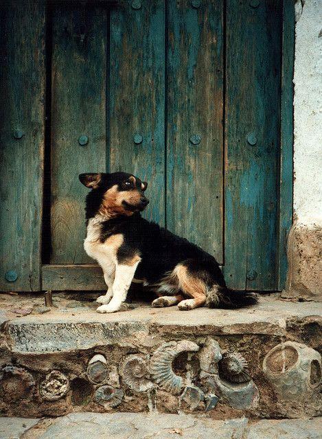 Dog Corgi Dog Baby Dogs Dogs
