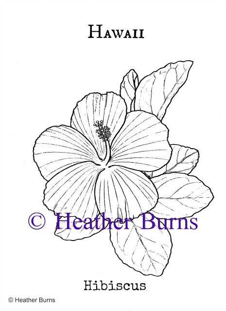 Hawaii State Flower Hibiscus Coloring Books Hibiscus Flower