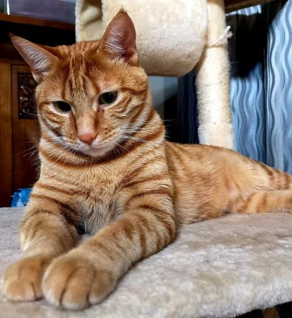 21 Of The Best Orange Tabby Cats You Will See Today