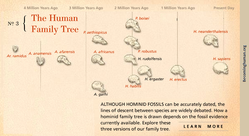 Human Family Tree Becoming Human Anthropology Comics And Images