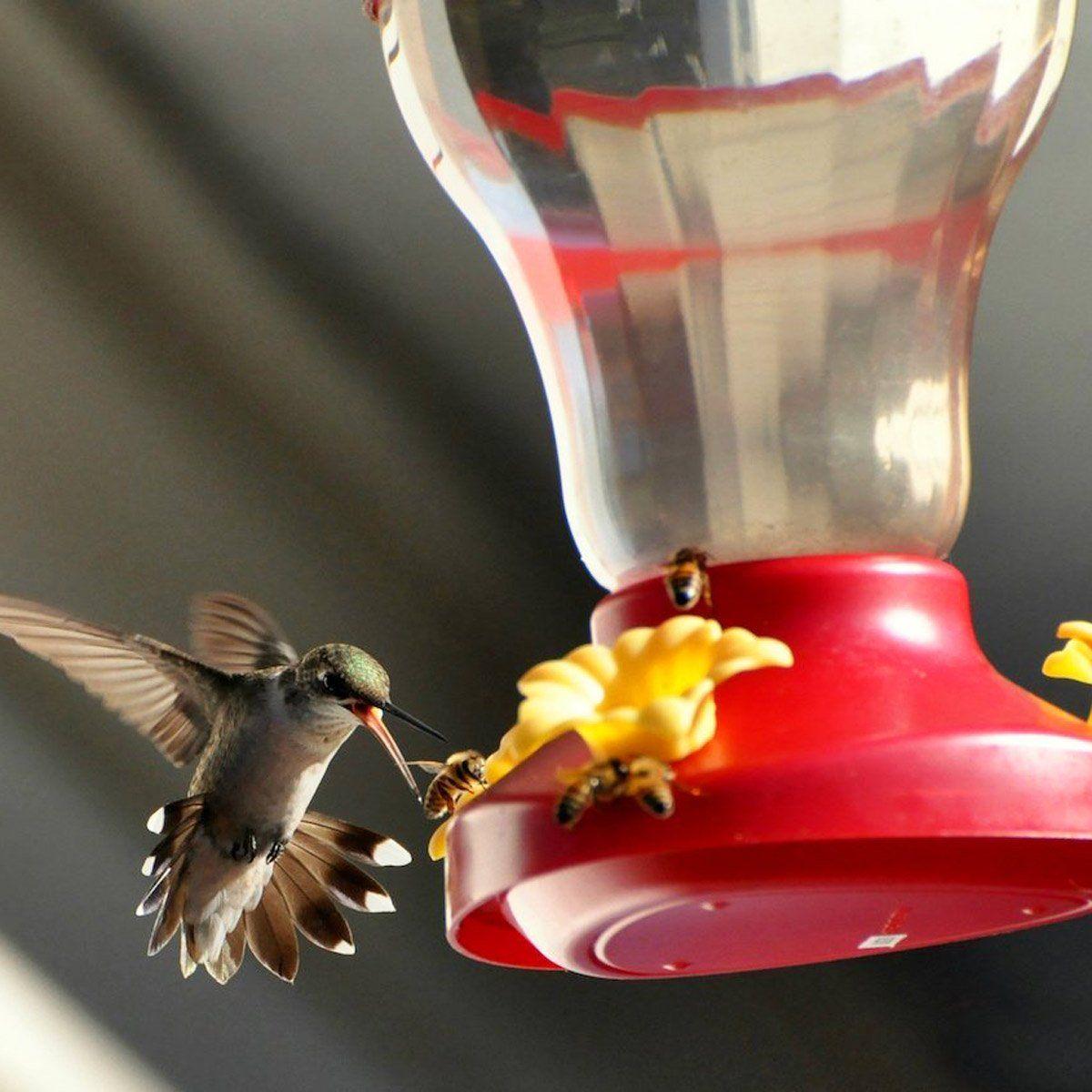 7 Natural Ways To Keep Bees And Ants Away From Hummingbird Feeders In 2020 Humming Bird Feeders Red Wasps Bee Hummingbird