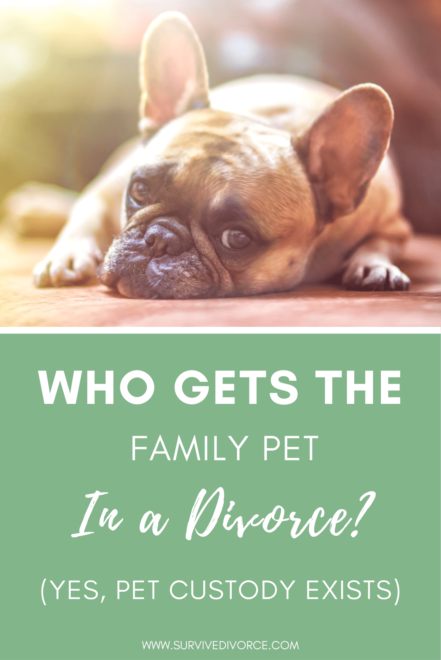 Pet Custody 101 Who Gets The Pets In A Divorce Custody Divorce