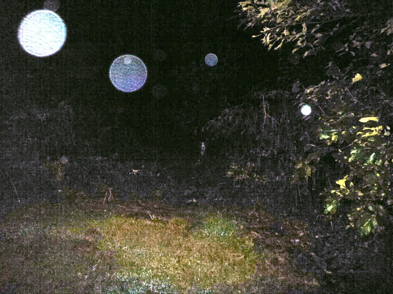 Back Yard Orbs Colors Of Orbs Http Www Pinterest Com Pin 279434351851720024 Orbs In Photos Ghost Orbs Orb
