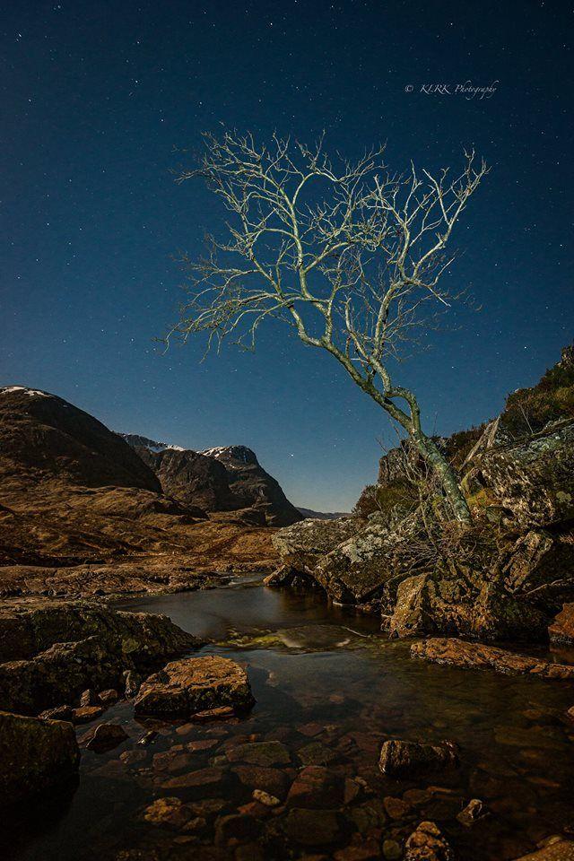Glen Coe a lone tree beneath the stars, Highland, Scotland