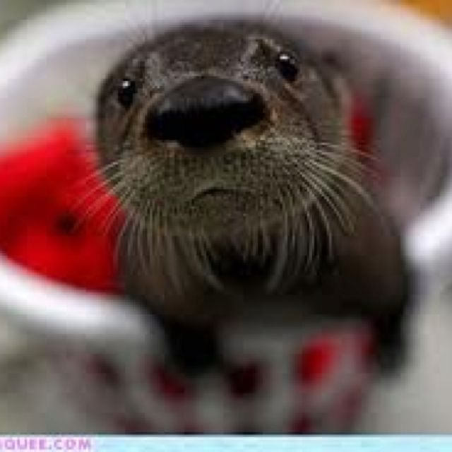 Cute Animals, Baby Otters, Cute Baby Animals