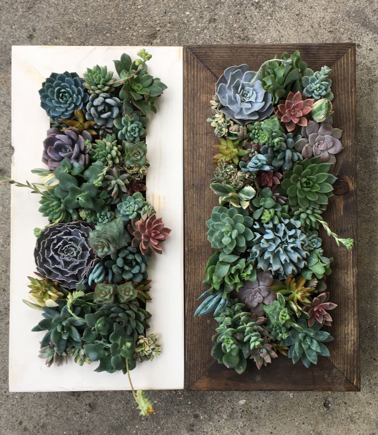 20X10 Living Wall Succulent Planter Vertical Hanging Garden Art Rustic