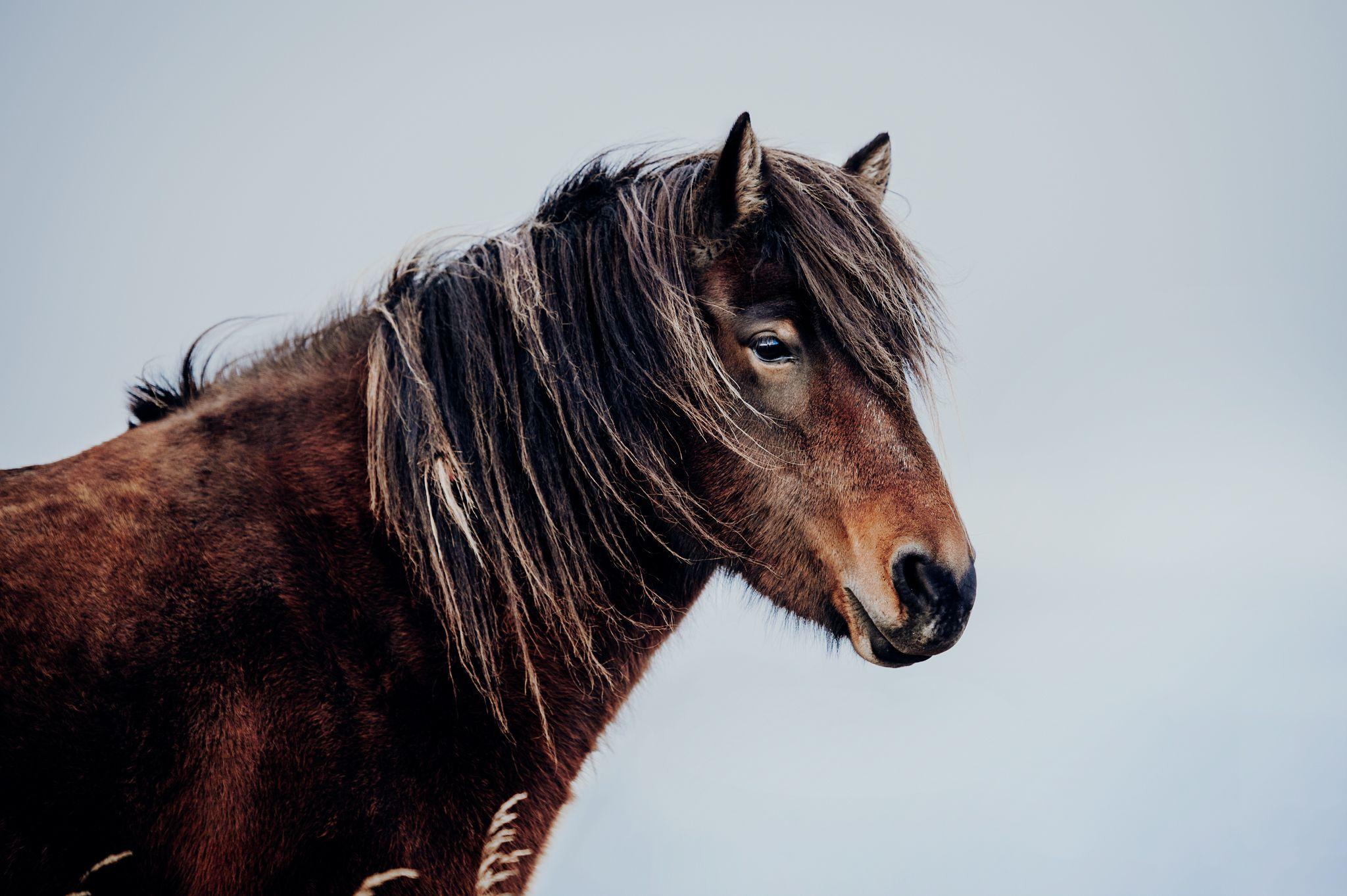 Fotos Pferde In Der Natur I Pferde Pferde Fotografie Islandpferde