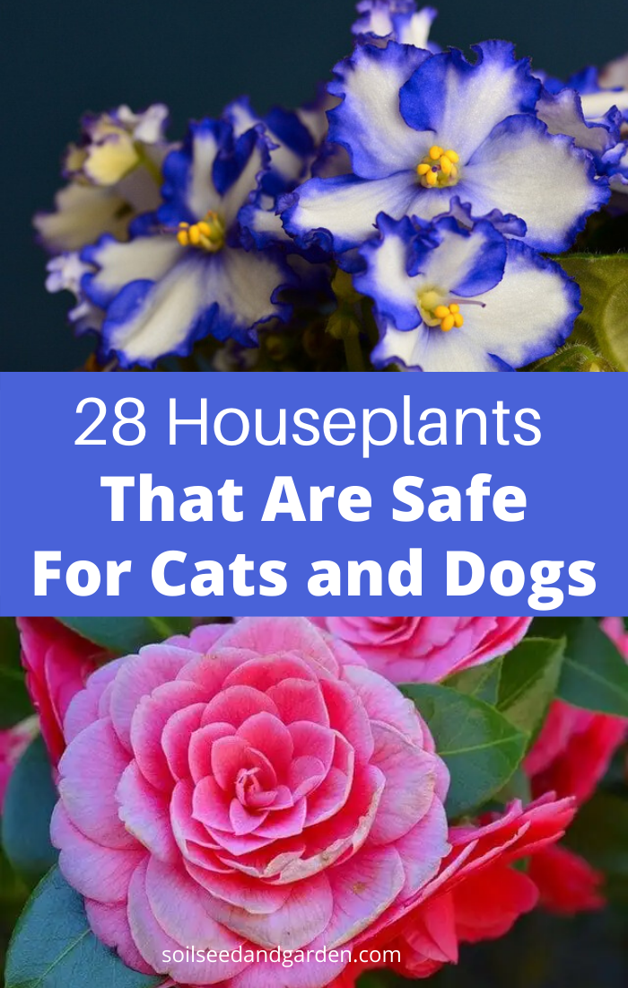 28 Pet Friendly Houseplants That Are Not Toxic To Cats And Dogs Houseplants Dog Cat Cats